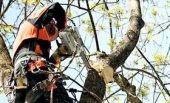 Пилы для ухода за деревьями